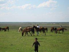 Ногай шоьль Сырт Кавказ