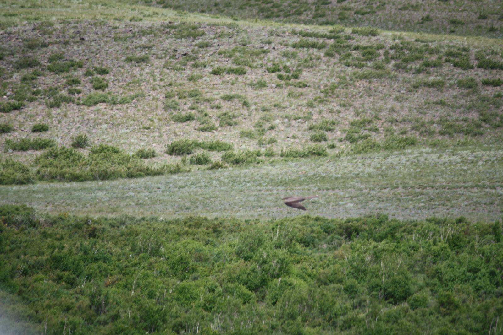 Низколетящая большая птица-7.jpg
