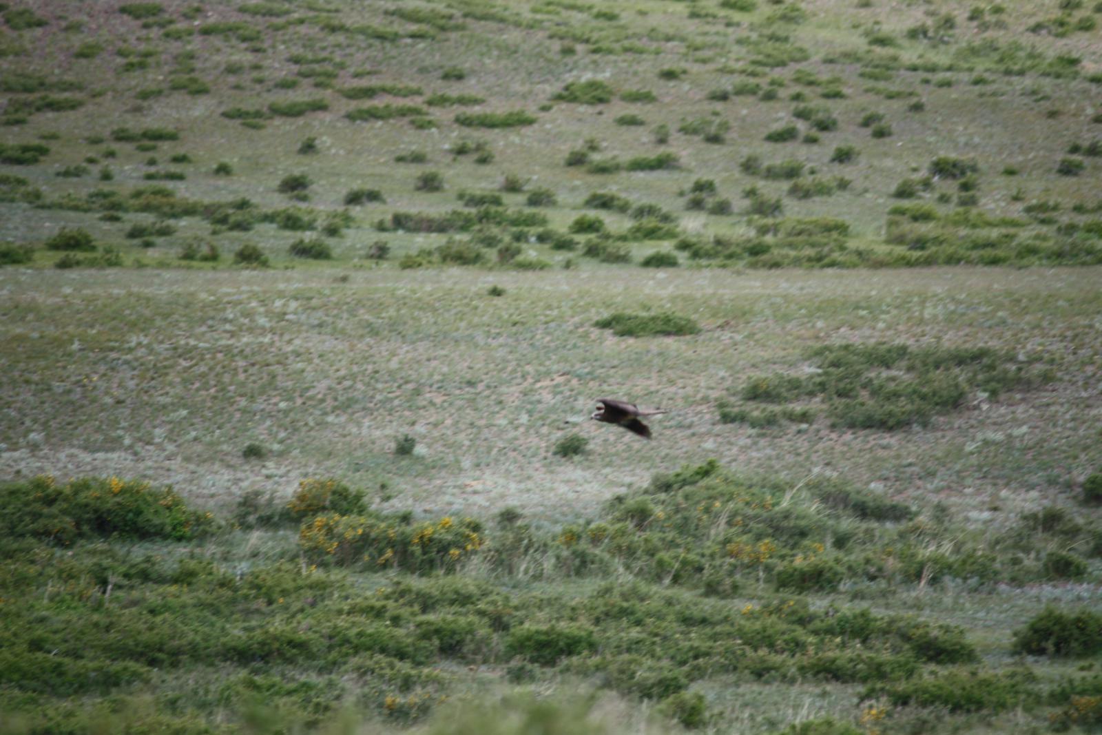 Низколетящая большая птица-5.jpg