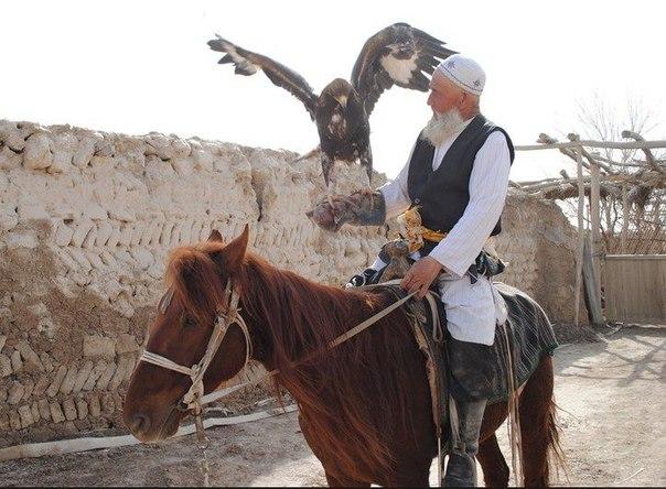 Пожилой уйгур, буркутчи