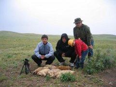 Охота на сурков.Казахстан.
