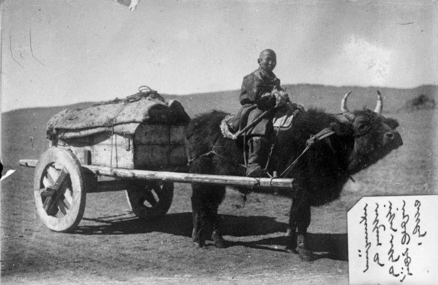 Картинки по запросу монголы повозки быки