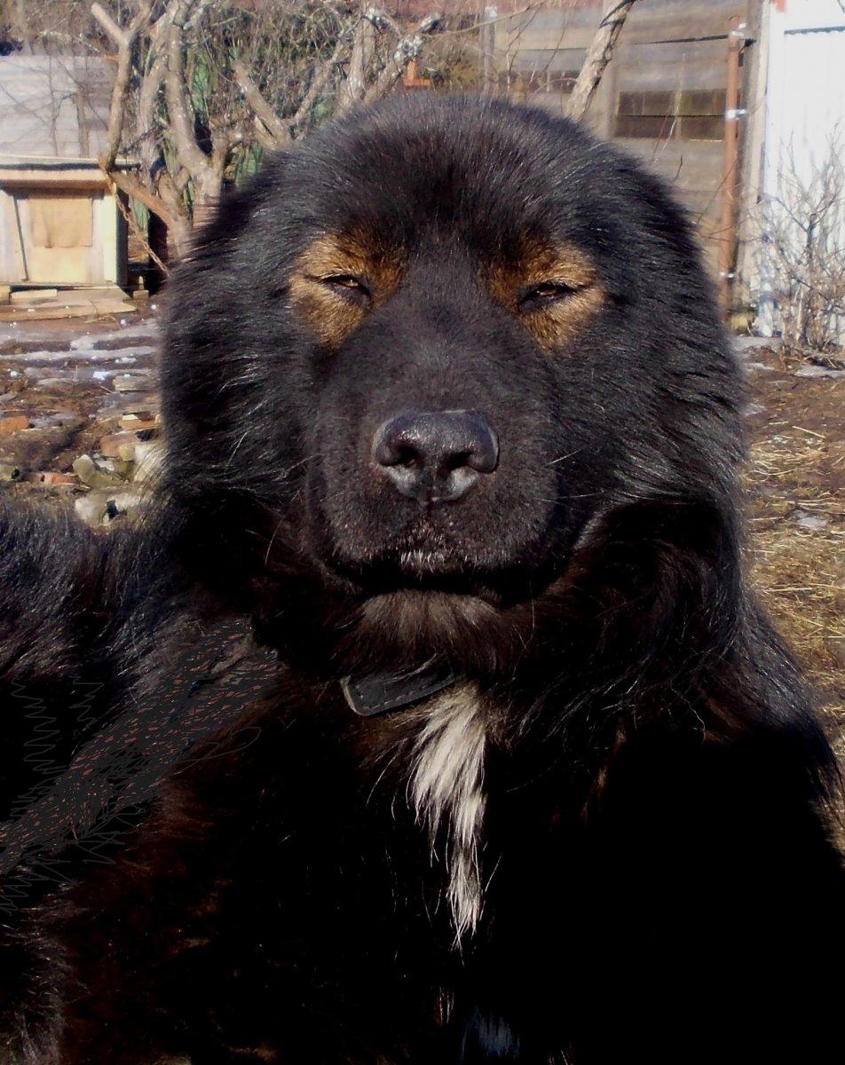 Потомок Чингисхана — копия.JPG